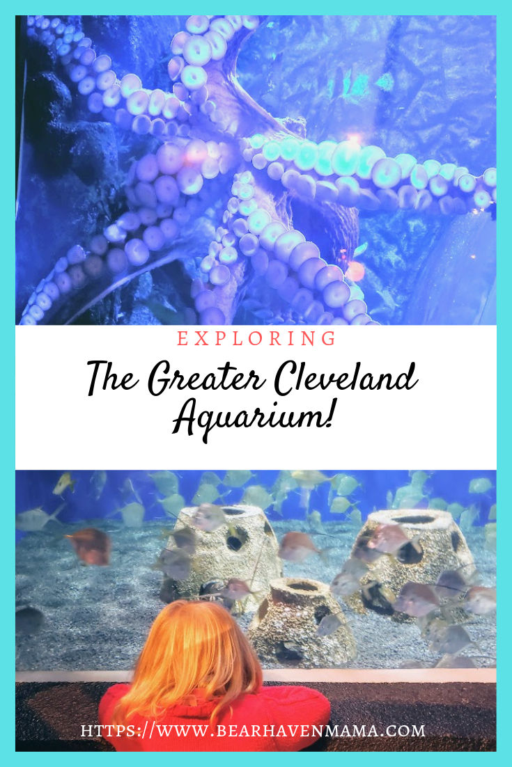 why-you-should-explore-the-greater-cleveland-aquarium